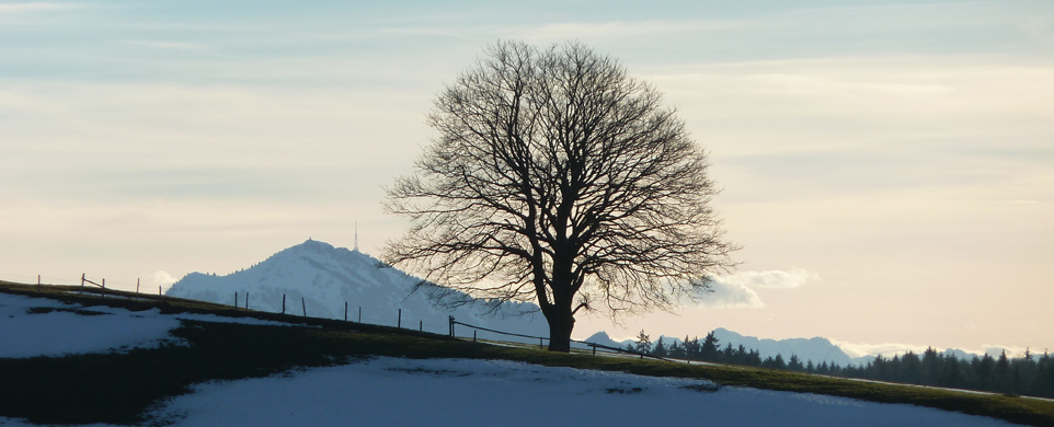 Tree on Hill Edge