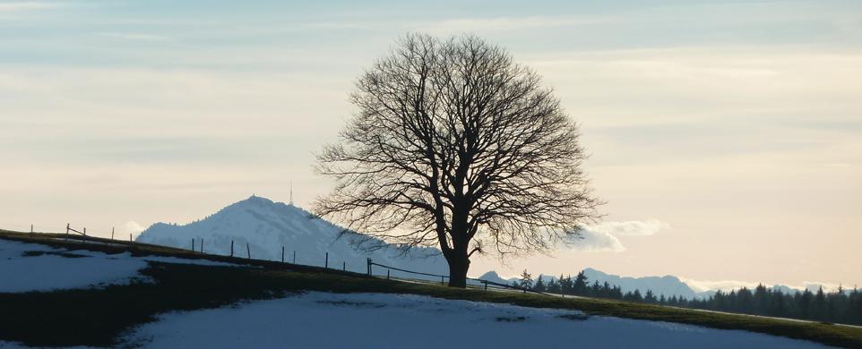 Tree on Hill Edge